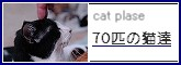 cat plase 70匹の猫達